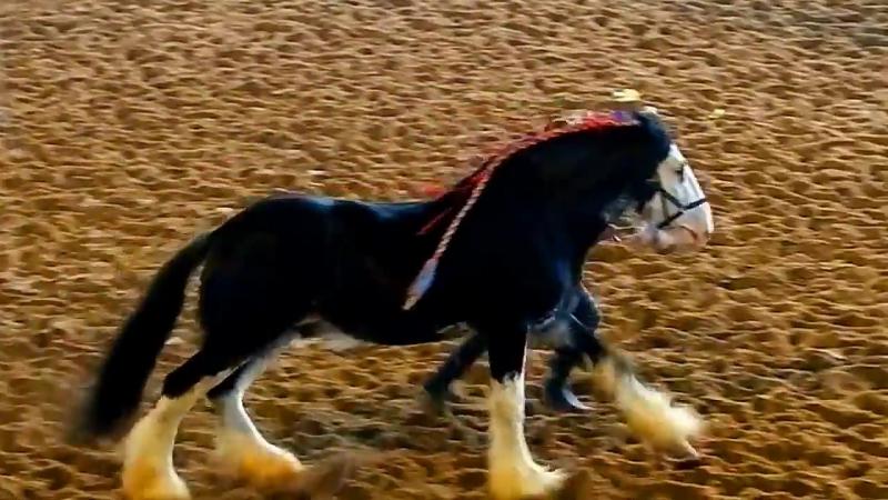Порода лошадей Шайр ...