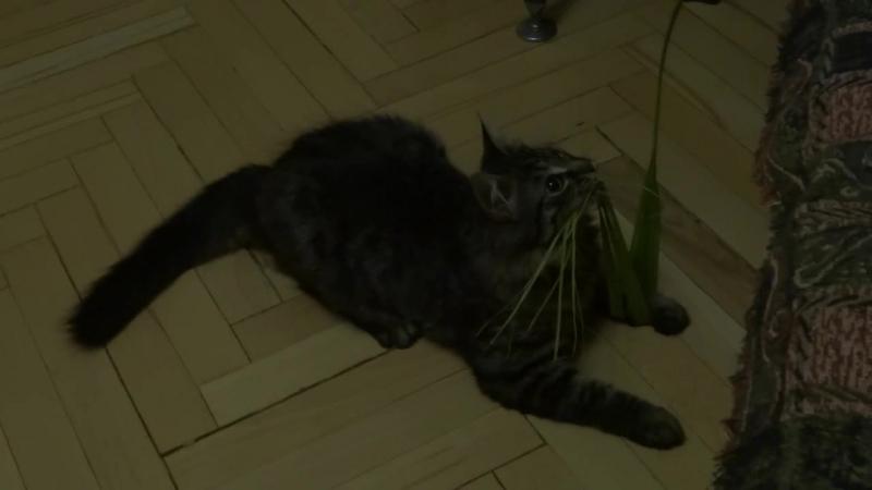 котенок полосатый 2018