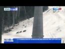 Медведица вывела потомство на прогулку в горах Сочи