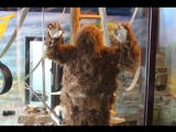 Йети в Нижегородском зоопарке