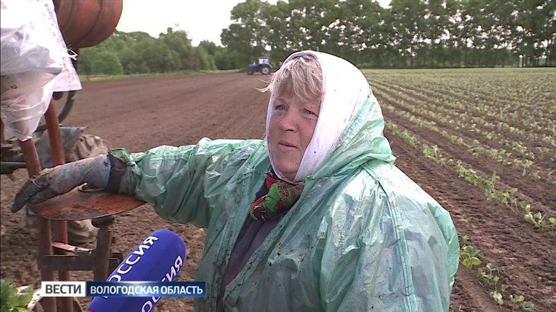 Погода внесла коррективы в планы аграриев