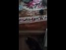 Жирный кот избил очкарика смотреть онлайн и без регестрации