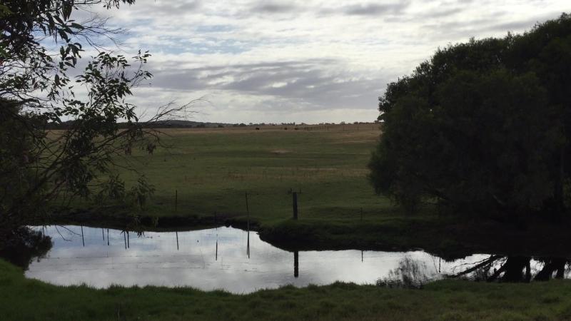 Мычащие коровки в Западной Австралии