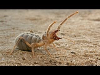 ПАУКИ В ДЕЛЕ! Паук против скорпиона, мыши, ящерицы, змеи