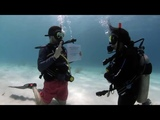 Guy Proposes to Girlfriend During Scuba Dive - 996023