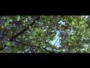 Прекрасная зелёная  La belle verte (1996)  DVDRip