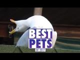 Самые смешные и милые видео с животными за 2017 Год [Рифмы и Панчи]