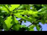 02.Makis Ablianitis - Astro Krifo (Instrumental)