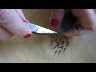 Как забрать мальков у самок цихлид оз. Малави