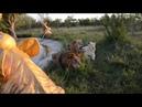 Львы на возле озера с золотыми слонами ЖИВОПИСНО Крым Тайган