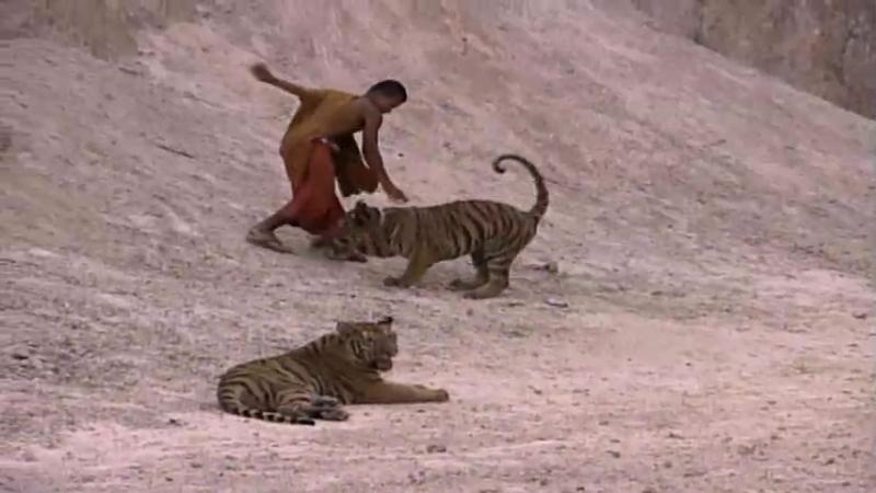 1.2 Tiger sanctuary
