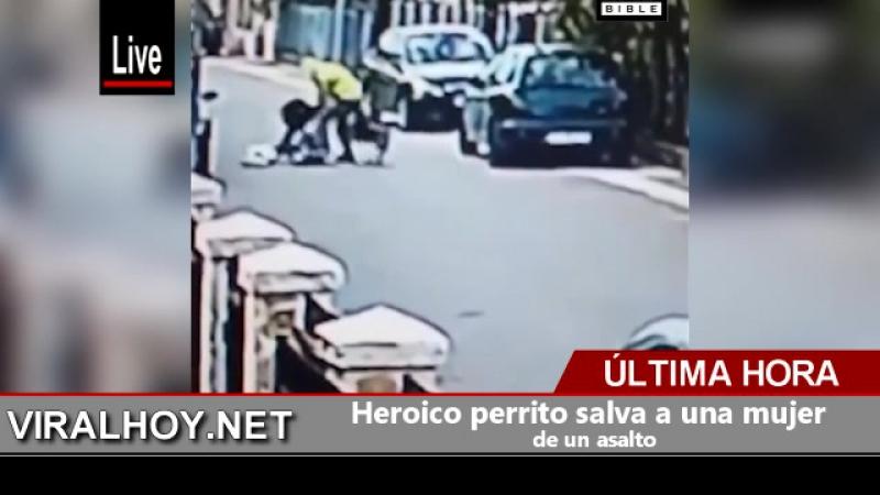 Heroico perrito salva a una mujer de un asalto