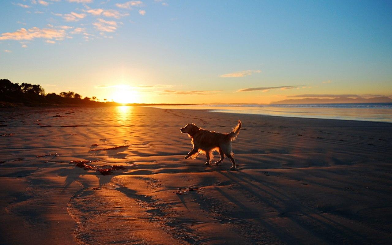 море, собака