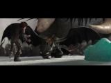 Беззубик под гипнозом Вожака