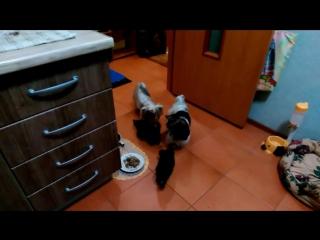 У нас праздник! Нам 2 месяца!Вся моя дружная собачья семья.Моя дружная собачья семья! У нас праздник, детям Бали 2 месяца!!!