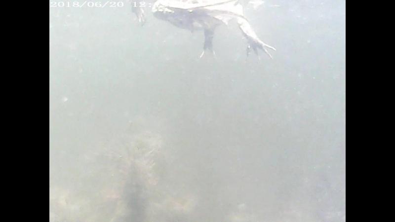 Тест подводной камеры