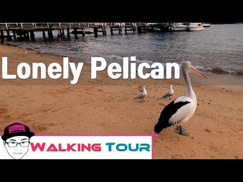 Lonely Pelican Watsons Beach Bay Sydney Hot spot Walking Tour Most Beautiful Place Ever