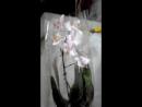 Розпаковка посилки з орхідеями