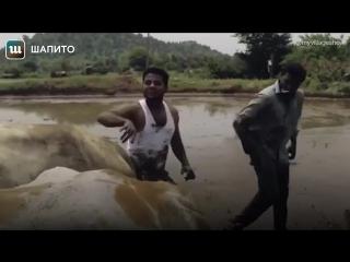 Флешмоб Kiki Challenge: индийские фермеры в нем — лучше всех