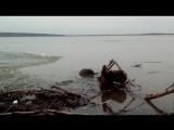 Друг-бобёр на Обском море 02.05.18