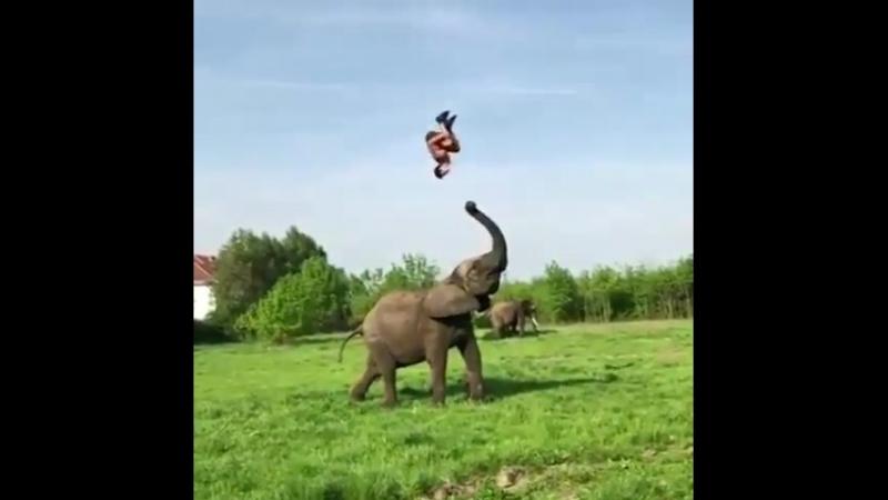 Слон помогает волейболисту подпрыгнуть