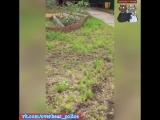 Город Тында 20.07.18 В Приамурье полиция применила оружие против мужчины, размахивавшего мачете