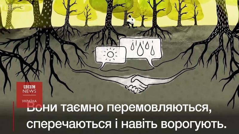 Дерева говорять одне з одним. Про що?