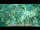 Наш отпуск на Бали ❤💝🌊🌴🌞