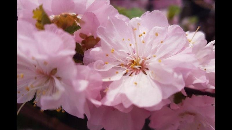 Весенний вальс цветов на музыку Чайковского из балета Щелкунчик