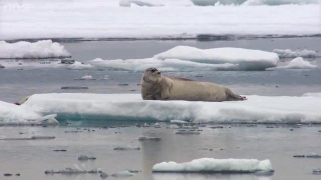 Тюлень с большими мечтами · coub коуб