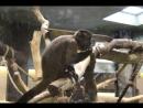 обезьянка по имени Санек