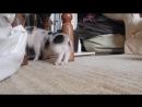 прикольный свин танцует под dj басс приколы 2018 с животными