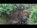 Спасение слонов