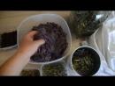 Травяной чай. Травы, которые мы заготавливаем для чая.