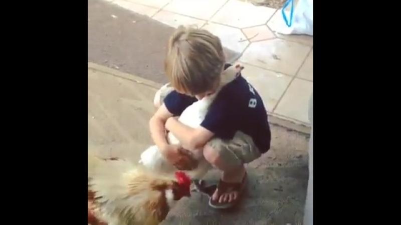Мальчик обнимает любимую курицу