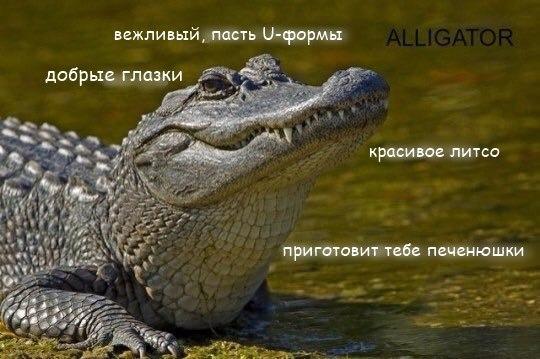 Фото №456277839 со страницы Алексея Загорского