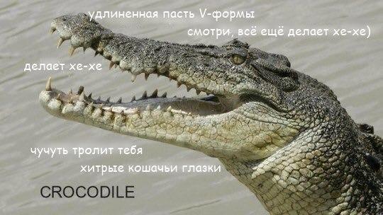 Фото №456277840 со страницы Алексея Загорского