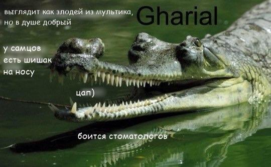 Фото №456277841 со страницы Алексея Загорского