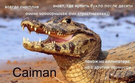 Фото №456277842 со страницы Алексея Загорского