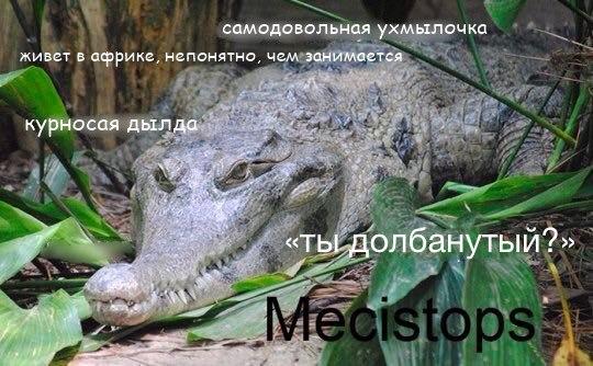 Фото №456277843 со страницы Алексея Загорского