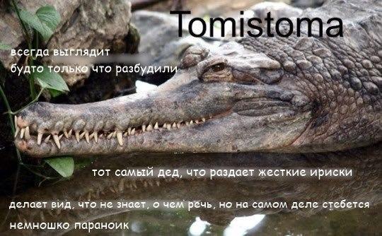 Фото №456277844 со страницы Алексея Загорского