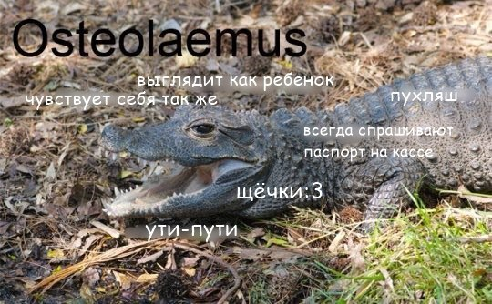 Фото №456277845 со страницы Алексея Загорского