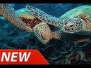 Tortoise Turtle - Wildlife Documentary - Animal Planet - National Geographic Documentary 2015