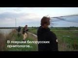 Сроки весенней охоты в Беларуси увеличили с 28 дней до 2 месяцев.  И из-за этого некоторые виды пернатых могут оказаться под угр