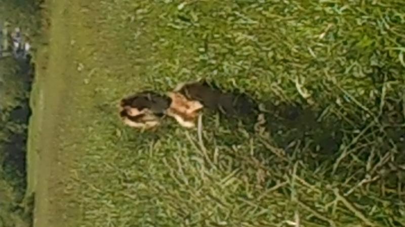 DSCN4170 1 Детишки на прогулке в стране дремучих трав