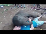 Baby elephant kisses jubilant man with its mouth around his face - Daily Mail