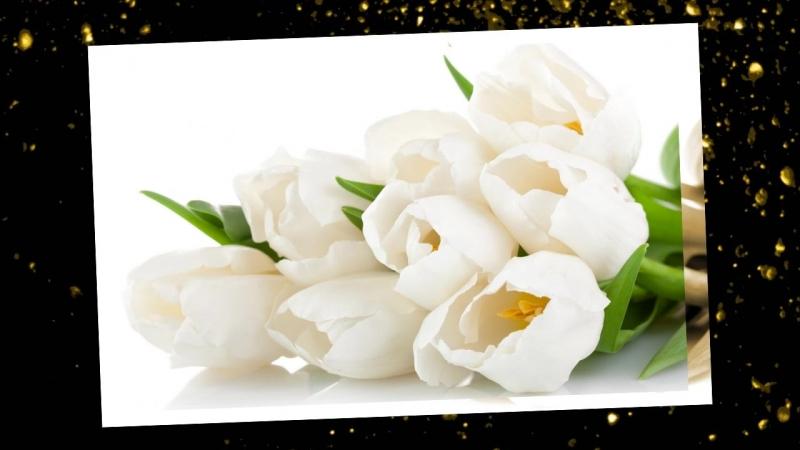 Цветы белоснежные
