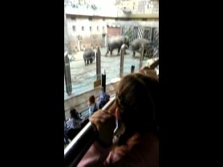 Ааа) маленький слонёнок мне кажется я была больше рада это видеть чем Маруся 👧)