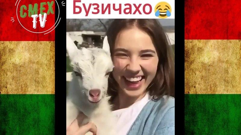 Таджикские приколы VINE - 2018 62 выпуск /ПРИКОЛИ ТОЧИК