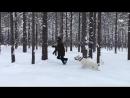 Зима в Орехово